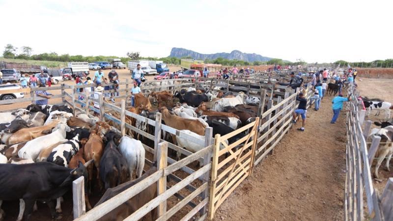 Feira de animais antecipada em Serra Talhada